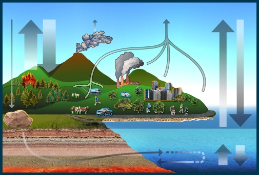 Carbon Cycle. Illustration by Ines Jakobsson